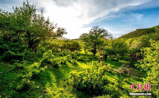 五月新疆托里县果子沟犹如一幅山水画