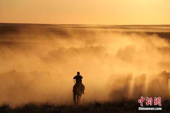 新疆北部牧民转场 夕阳下赶马美如画