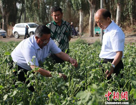 新疆兵团团场再遭冰雹袭击 2.1万亩作物受灾