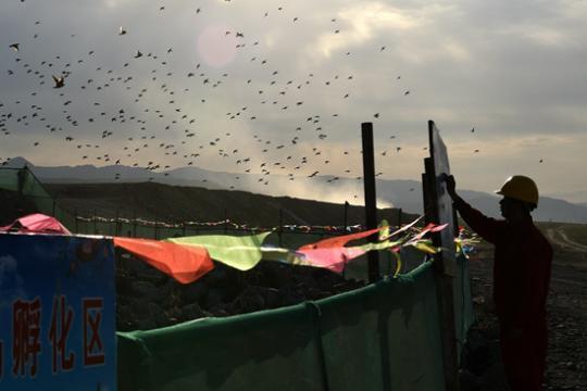 位于新疆国道218线墩麻扎至那拉提高速公路的椋鸟孵化区。
