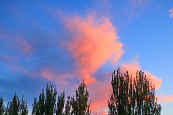 树梢上的火烧云。王陆斌摄