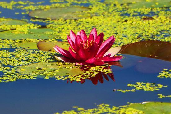 """巴州博湖县:在中国西海湖畔享受""""醉美""""自然"""