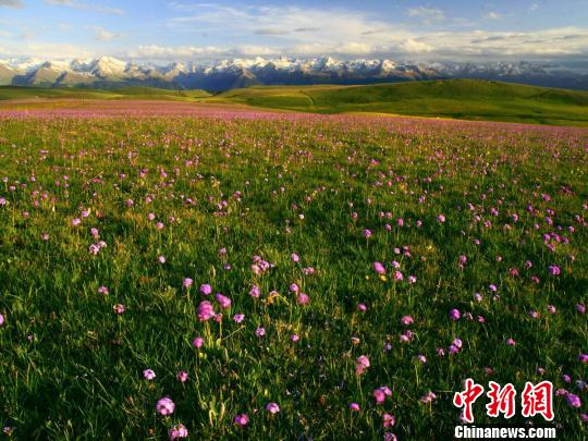 世界自然遗产地新疆喀拉峻草原迎客流高峰