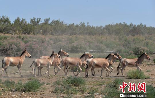 绿色发展理念助推新疆奇台旅游经济兴起