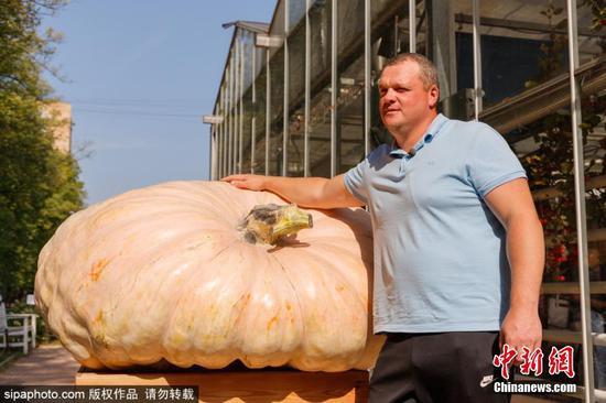 """""""战斗民族""""的蔬菜!俄罗斯最大南瓜重达645.5公斤"""