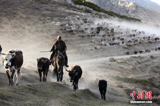 新疆牧民秋季转场 场面壮观令人震撼