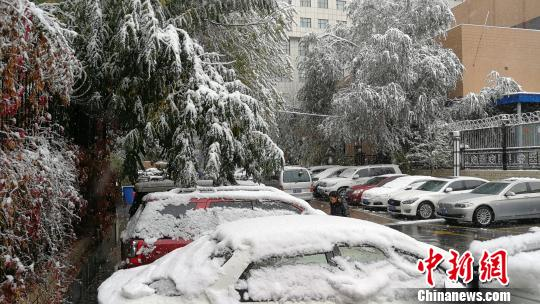 """乌鲁木齐暴雪致树""""折腰""""道路拥堵 航班延误"""