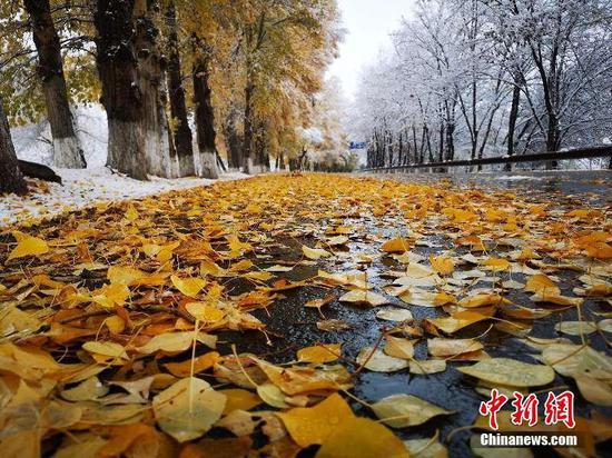 """持续降雪新疆天山天池景区现""""一黄一白""""景色"""