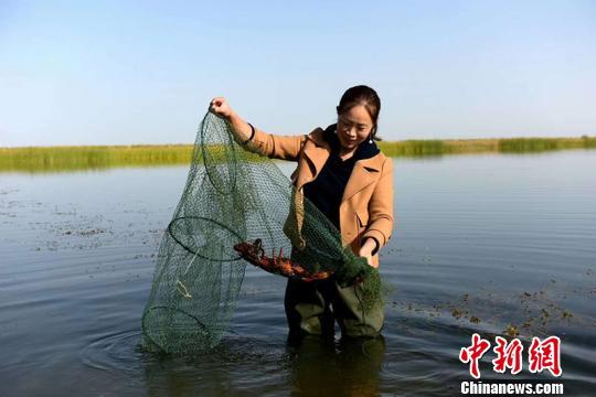 马春花展示已经长大的小龙虾。 周伟 摄