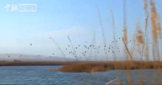 中国最大内陆淡水湖迎数万只候鸟越冬