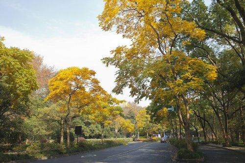 图为深秋杭州西湖边的灵隐路。王山 摄