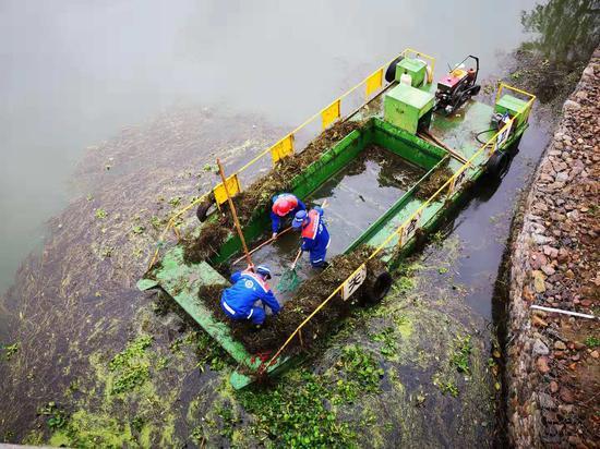 图为:工作人员打捞始丰溪中的水草 范宇斌 摄