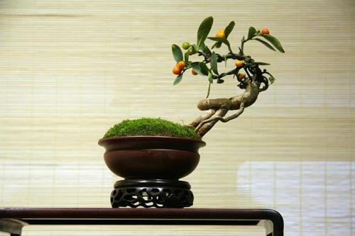 """图为""""诗情画意""""——浙派苏派盆景精品展展出的盆景。许玉东 摄"""
