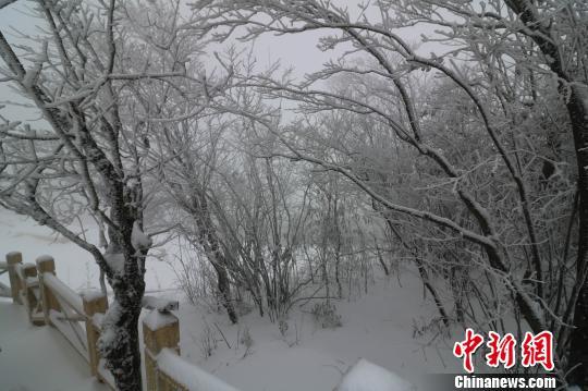 赤豆洋树木被积雪压弯。 唐文铭 摄