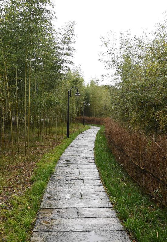 图为:始丰溪附近的石板路。  王刚 摄