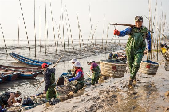 图为:渔民将收获的小海鲜挑上岸 郑高海 摄