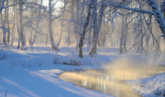 新疆哈巴河县冬季白桦林水雾缭绕别样美