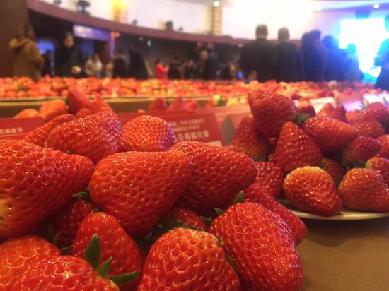 全国精品草莓擂台赛现场  施杭 摄