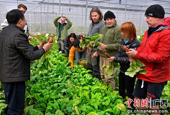 考查蔬菜种植。吕建伟 摄