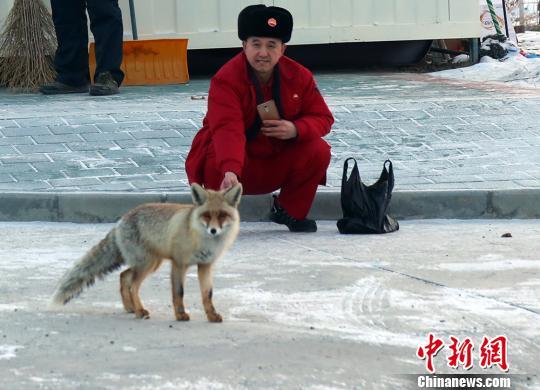 """新疆采气工人的朋友""""沙狐"""":""""约会""""持续6年"""