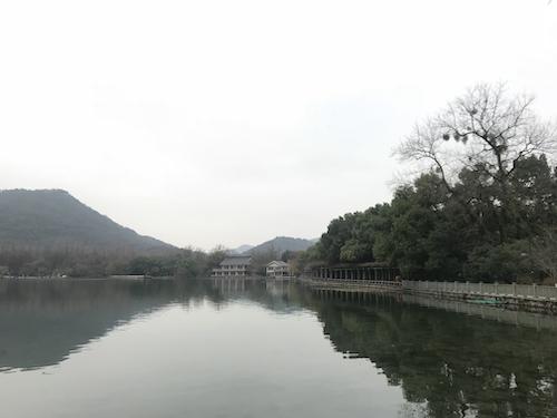 图为杭州花港观鱼。 江杨烨 摄