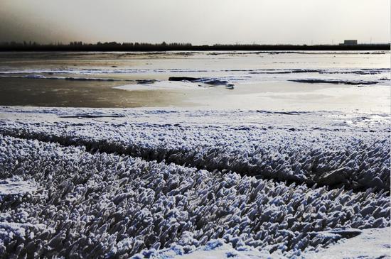 新疆塔里木河上游现河面封冻景观