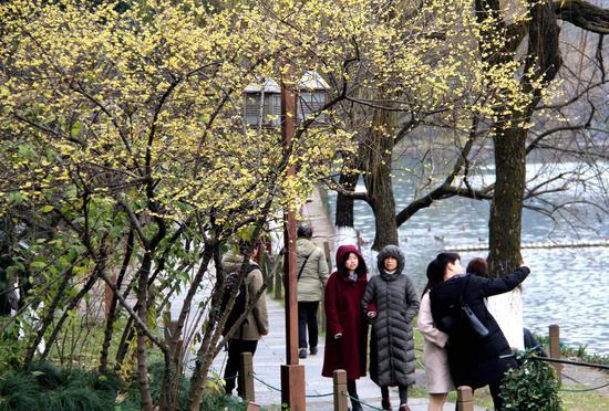 图为:游人在梅花树下游览。柱子(通讯员)摄