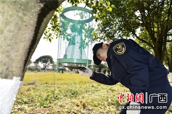 桂林海关关员开展口岸病媒生物监测工作。