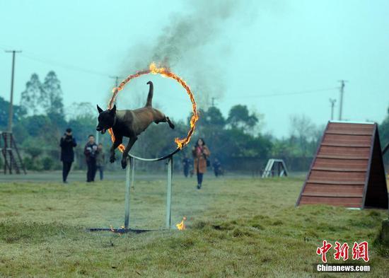 春运将至 广西南宁铁路警方举行警犬守护春运安全演练