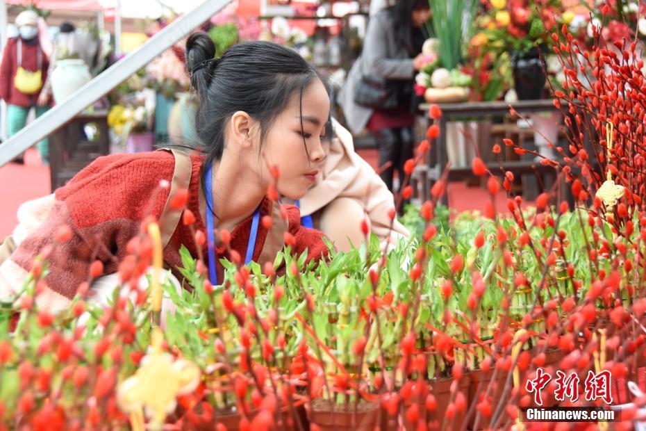 广西迎春花市热闹开张 千种鲜花添年味