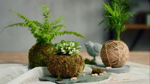 图为苔藓植物亲子DIY作品 。 主办方供图