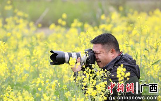 广西融安万亩油菜花开迎春