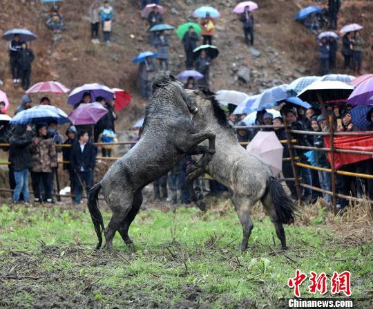 广西数千各族民众冒雨赶坡会看?#20223;?