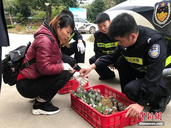 广西崇左边境管理支队查获200余只野生活体雏鸟