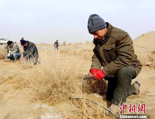 新疆且末县春季造林工作启动 计划完成7000亩