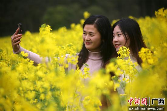 广西融水:花开春天里