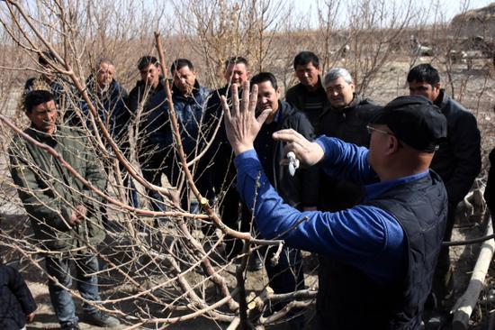 图为巴州林业局林果业专家在尉犁县兴平镇哈拉洪村为果农讲授桃树修剪技术。常学辉摄