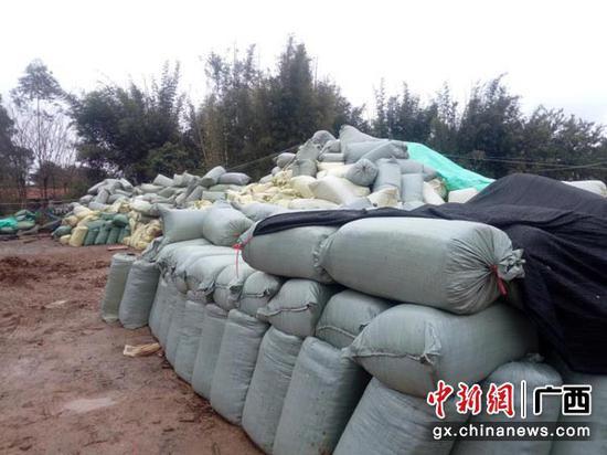 图为加工场里,囤集着10吨装好袋的新鲜甘蔗碎梢,准备外运外地。