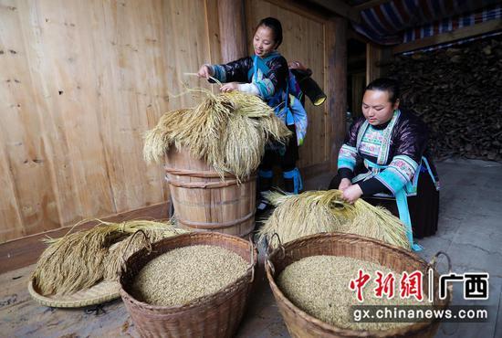 廣西融水:苗族百年碾米習俗煥發新機