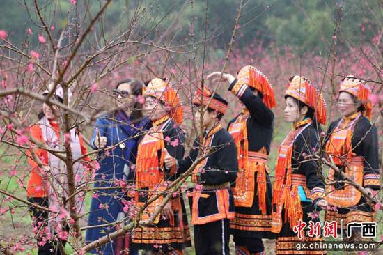陽春三月廣西平樂縣鄉村桃花節吸引萬名游客踏青賞花