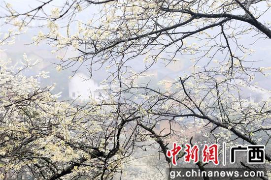 桂北山乡春色美