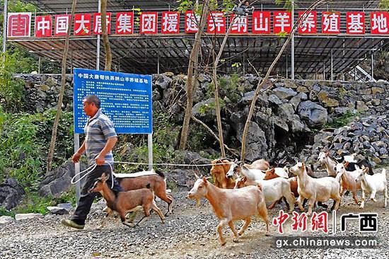 图为中国大唐集团帮扶弄纳山羊养殖基地。