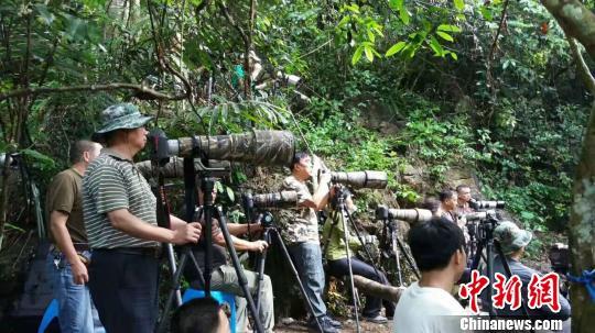 中越边城广西龙州举办国际观鸟节 18支队伍参赛
