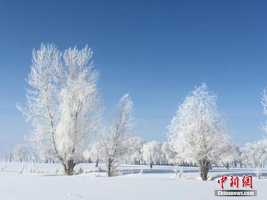 新疆北部富蕴县出现大面积雾凇美景