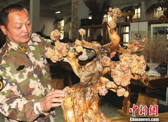 新疆兵团根雕艺人致力钻研根雕技艺化腐朽为神奇
