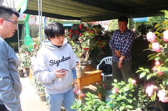 客商前来订购茶花。婺城区委宣传部提供