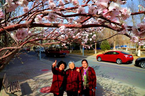 新疆库尔勒市桃红柳绿春意浓