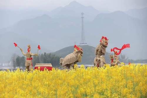 台州仙居油菜花节开幕 5万亩花田共41个新品