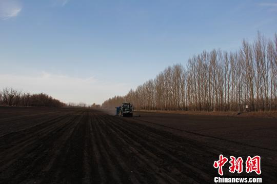 新疆兵团高寒团场春小麦开播 较往年提前近20天