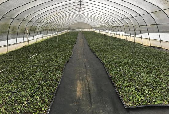 圖為農業園設施基質育苗基地 余杭區提供